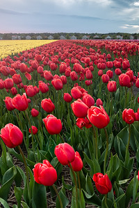 Dutch colors