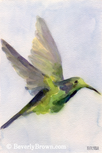 Hummingbird Watercolor Painting - Beverly Brown Art Prints