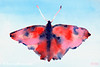 Red + Blue Butterfly Painting - Beverly Brown Art Prints