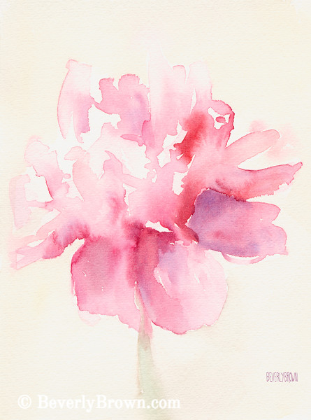 Pink Peony Watercolor Painting - Beverly Brown Art Prints