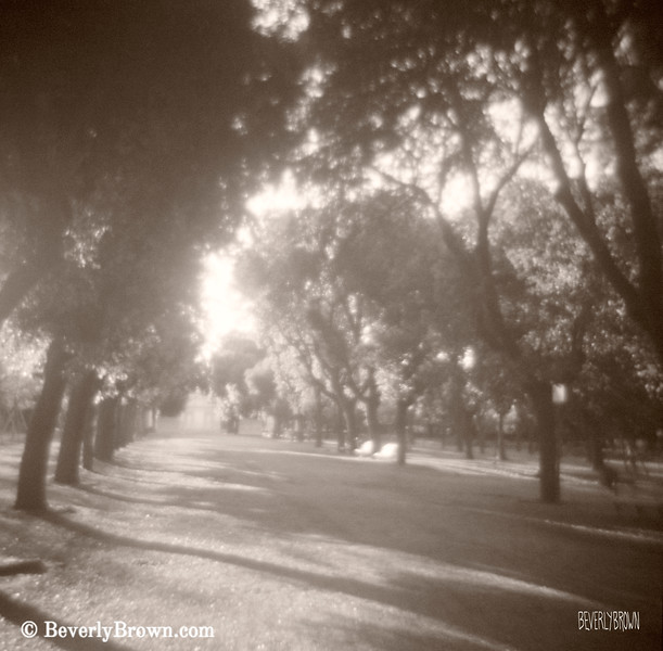 Borghese Gardens Path Rome Italy Photograph - Beverly Brown Art Prints