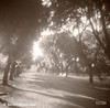 Borghese Gardens Path Rome Italy Photograph - Beverly Brown Prints