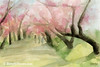 Watercolor Painting of Cherry Blossom Trees Central Park - Beverly Brown Art Prints