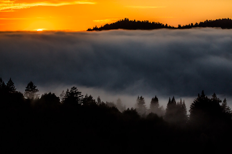Russian River Fog