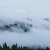 Fog Rolling Over Tamalpais, 2016
