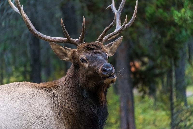 Jasper National Park, Alberta, Canada (2015)