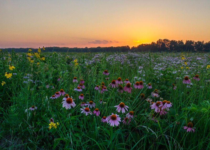 Huffman Prairie Sunset