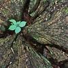 Tree Stump Leaf