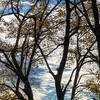 Tree Landscape at Dusk
