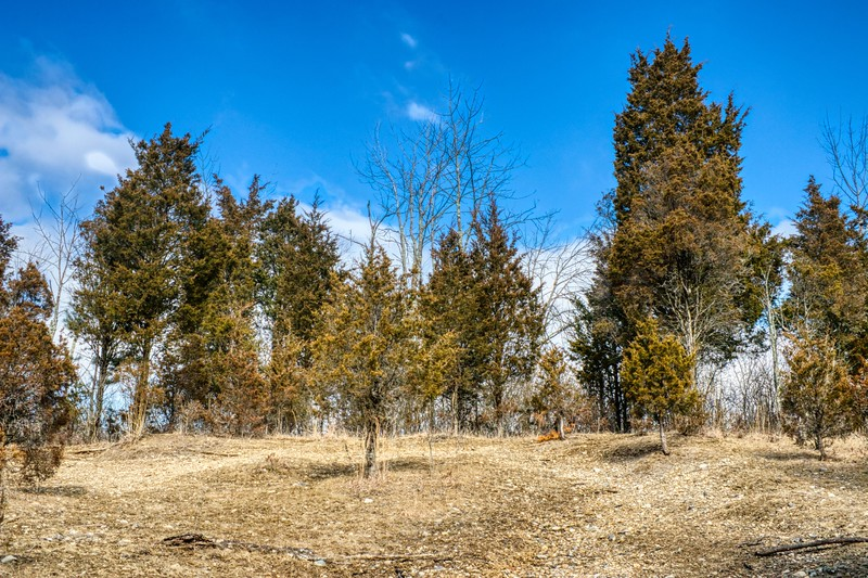 Blue Sky / Pine Trees