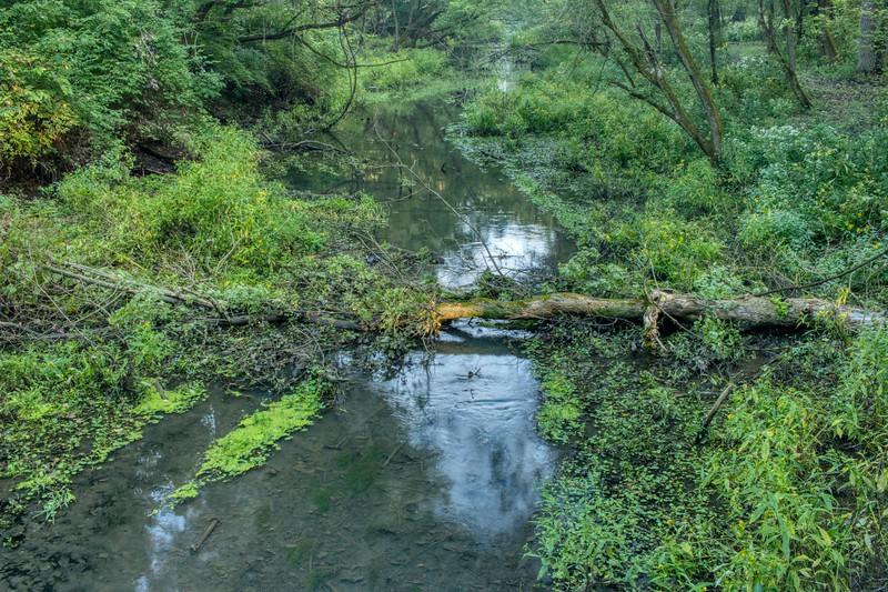 The Beaver Creek