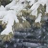 Pinecone Tree / Snow II
