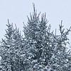 Pinecone Tree / Snow