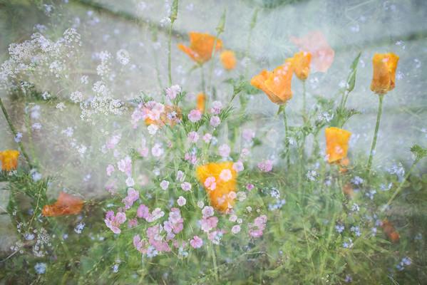 Garden Dreams 3