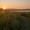 Super Bloom Sunrise