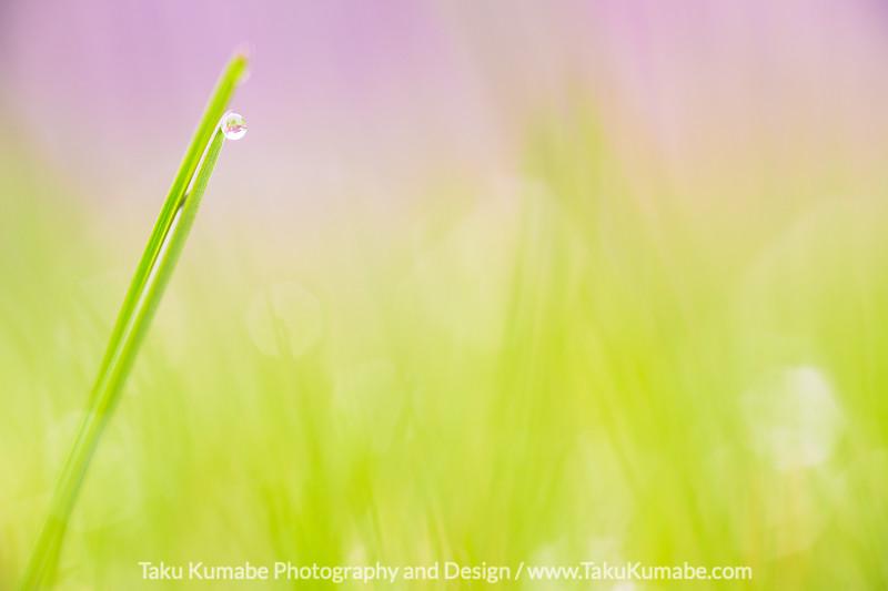 A Sliver of Grass