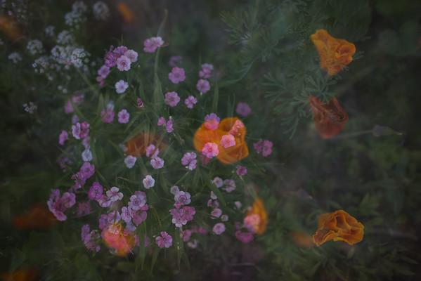 Garden Dreams 4