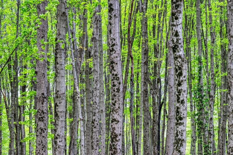 The Big Woods Trail