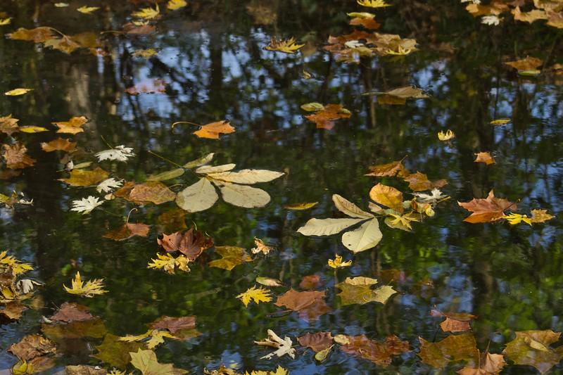 Fallen Autumn Leaves Abstraction