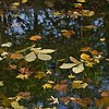Fallen Autumn Leaves Abstraction