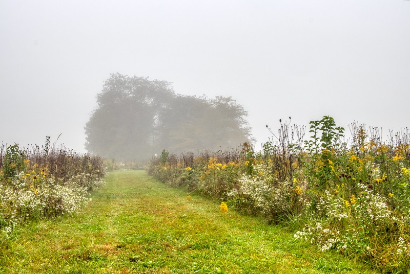 Early Morning Fog Prairie