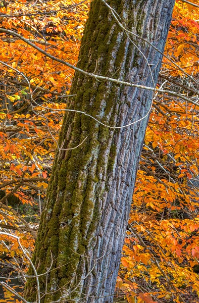 Clifton Gorge State Nature Preserve, Clifton, Ohio<br /> <br /> © 2019 Ryan L. Taylor Photography. All Rights Reserved.