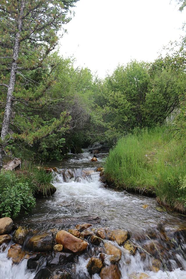 Desert stream<br /> Great Basin NP.