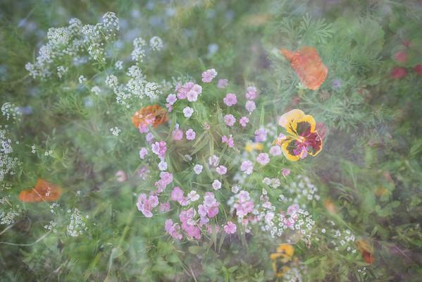 Garden Dreams 2
