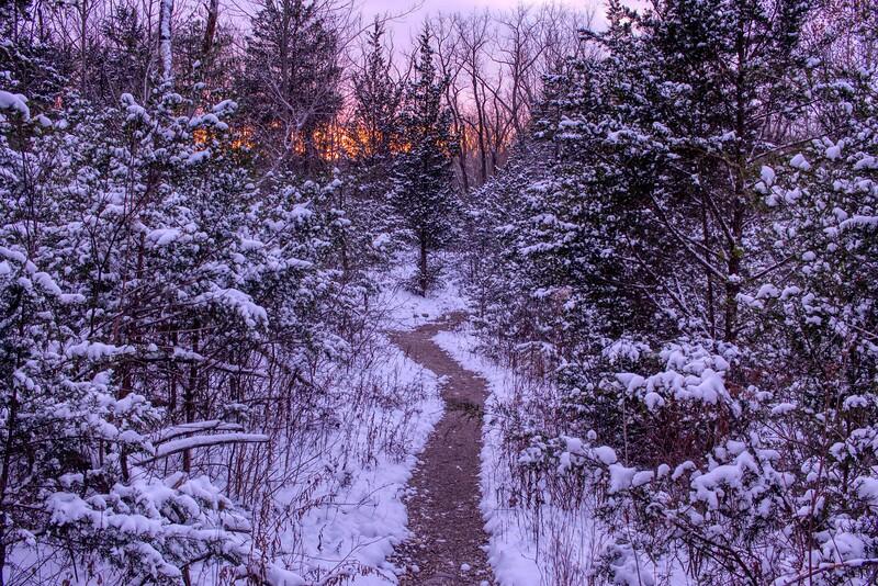Twilight Woodland