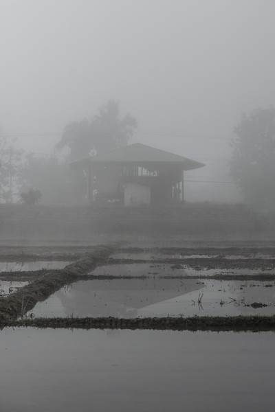 Abandoned home on a rice field - Prao, Thailand