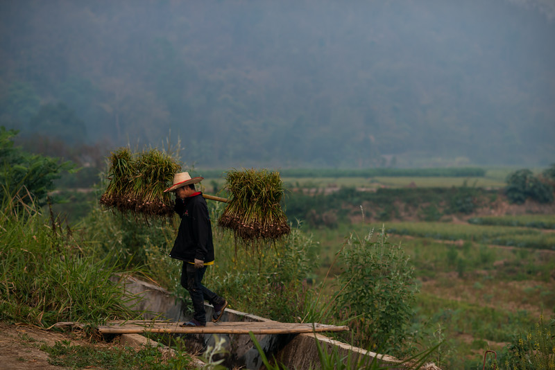 A farmer carrying green onions from the fields in Pai, Thailand