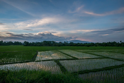 Rice fields at sunset, San Pa Tong, Chiang Mai