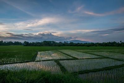 Rice fields at sunset, San Pa Tong, Chiang Mai