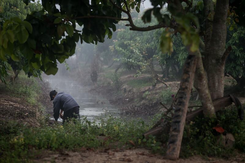 Working in the lonkan garden