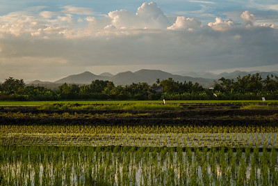 A rice field at sunset in San Patong, Thailand
