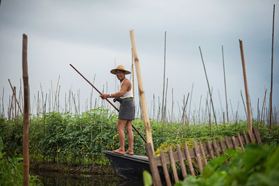 Burmese fisherman tending to his floating garden while enjoying a smoke. Inle Lake, Myanmar