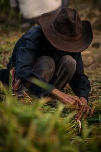 A Thai farmer picking green onion from the fields in Pai, Thailand