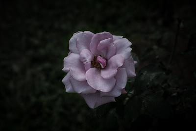 Rose Garden - Chiang Mai, Thailand