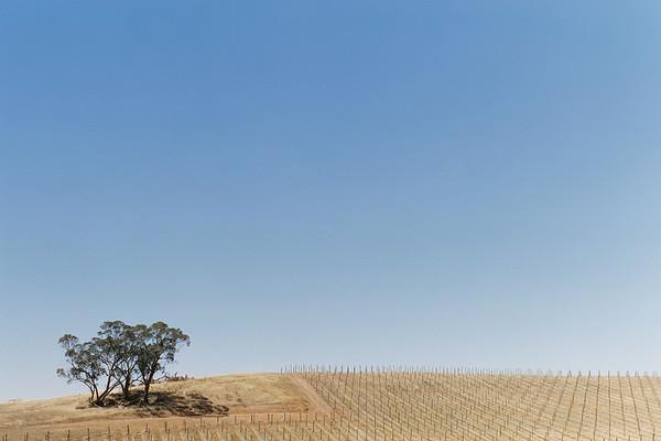 Empty Vines