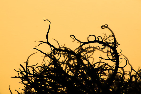 Moss at Sunrise