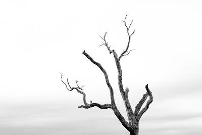 An Old Tree in Fish Creek