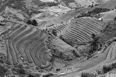 MuCangChai rice terraces