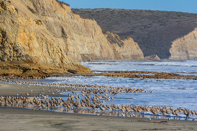 Drakes Beach, Point Reyes National Seashore.