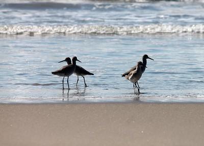 Four Shore Birds Sunset Beach Series 2