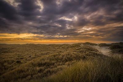Beach grass and sky