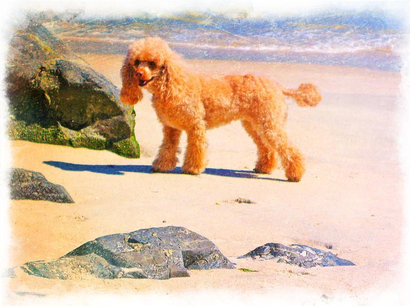 Lily beach 2