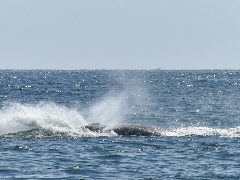 Whales06