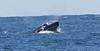 A whale05