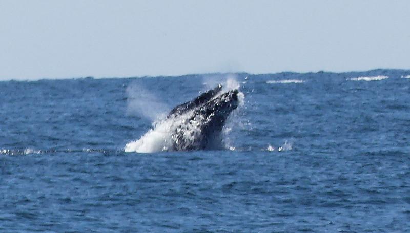 A whale03
