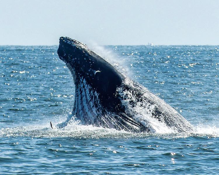 Whale8x10